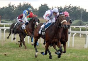 corsa cavalli
