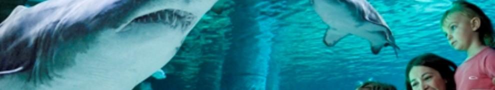 foto-acquario-di-cattolica4